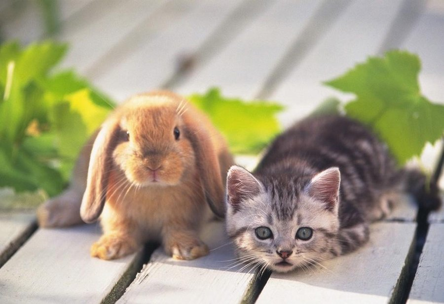 bunnies and kittens. Cute Kitten and Bunny