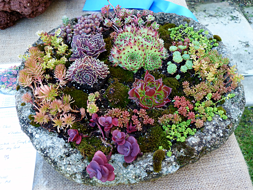 Newport Flower Show, floral arrangement
