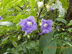 """It was raining """"Purple Flowers"""" on the """"KARVI TRAIL""""."""
