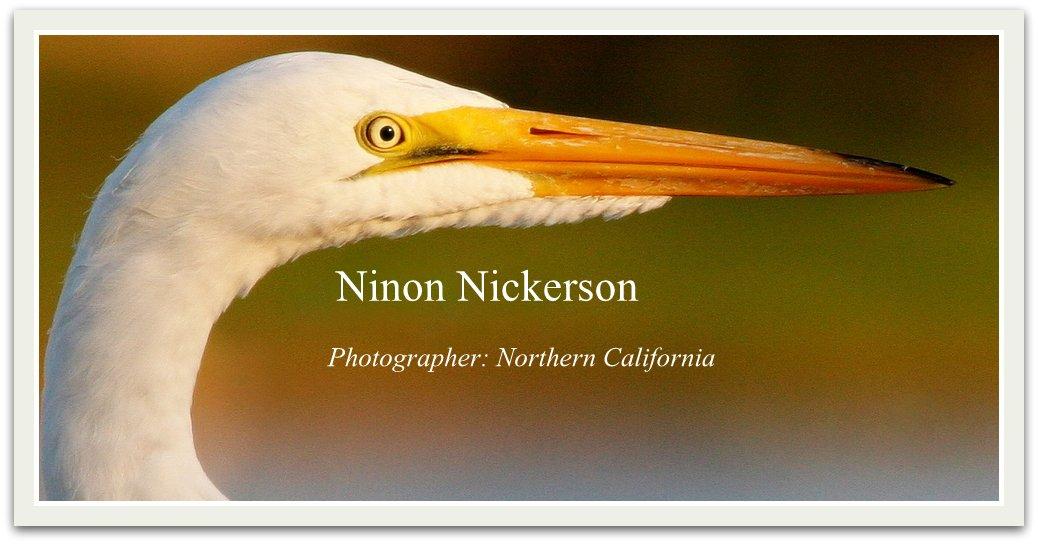 Ninon Nickerson