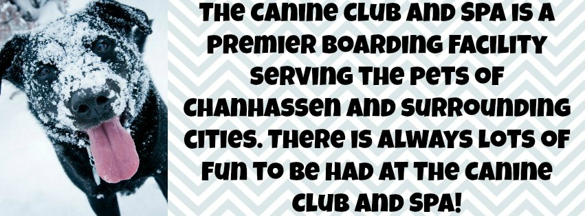 The Canine Club and Spa