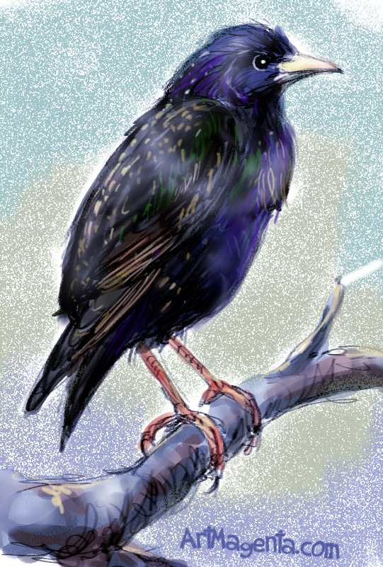 A starling sketch painting. Bird art drawing by illustrator Artmagenta