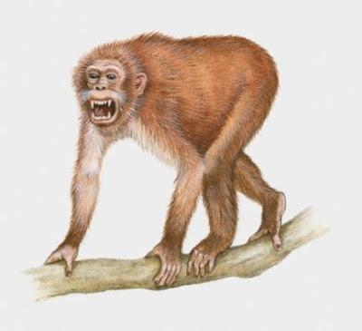 primates prehistoricos Propliopithecus