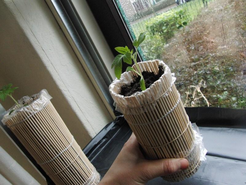 Moestuin Zelf Maken : Mijn kleine moestuin plantenpotjes maken