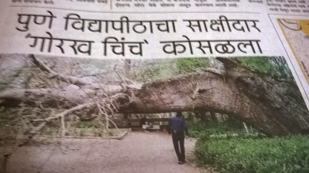Pune trees