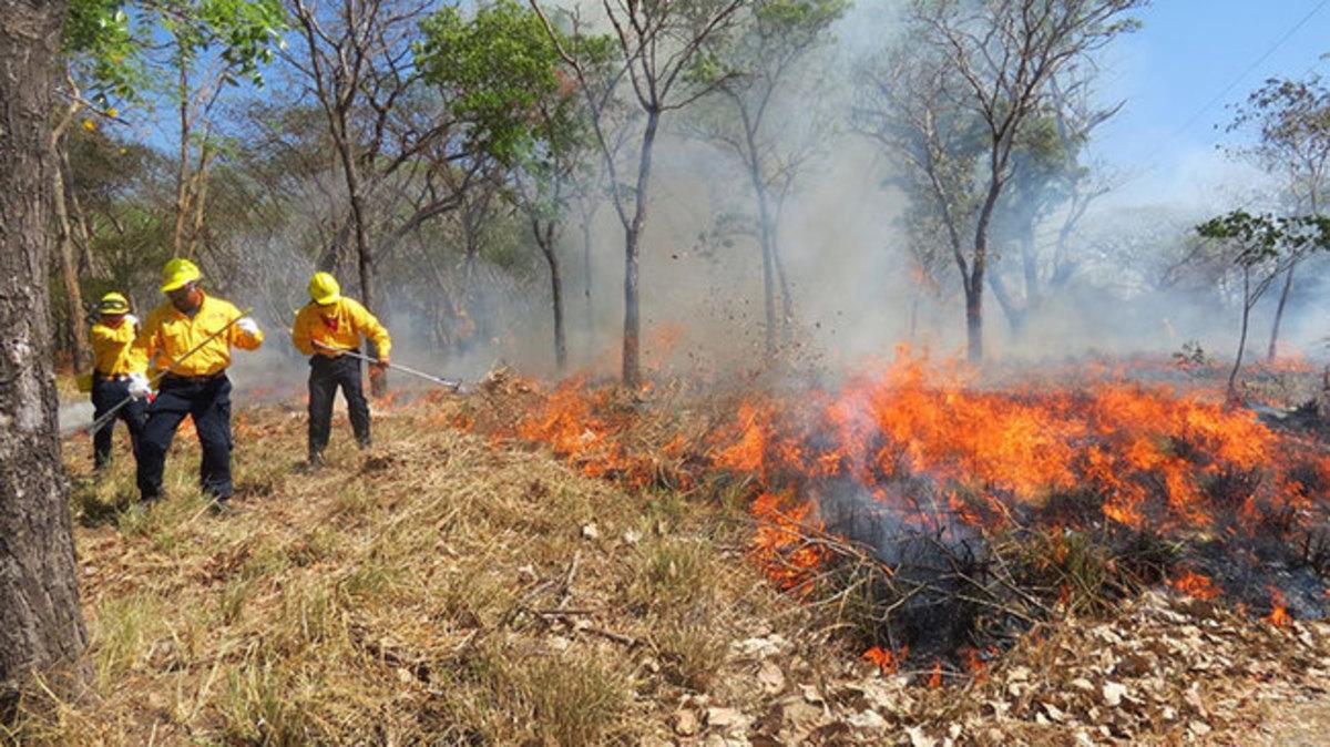 M xico registra conafor 153 incendios forestales durante for Viveros forestales conafor