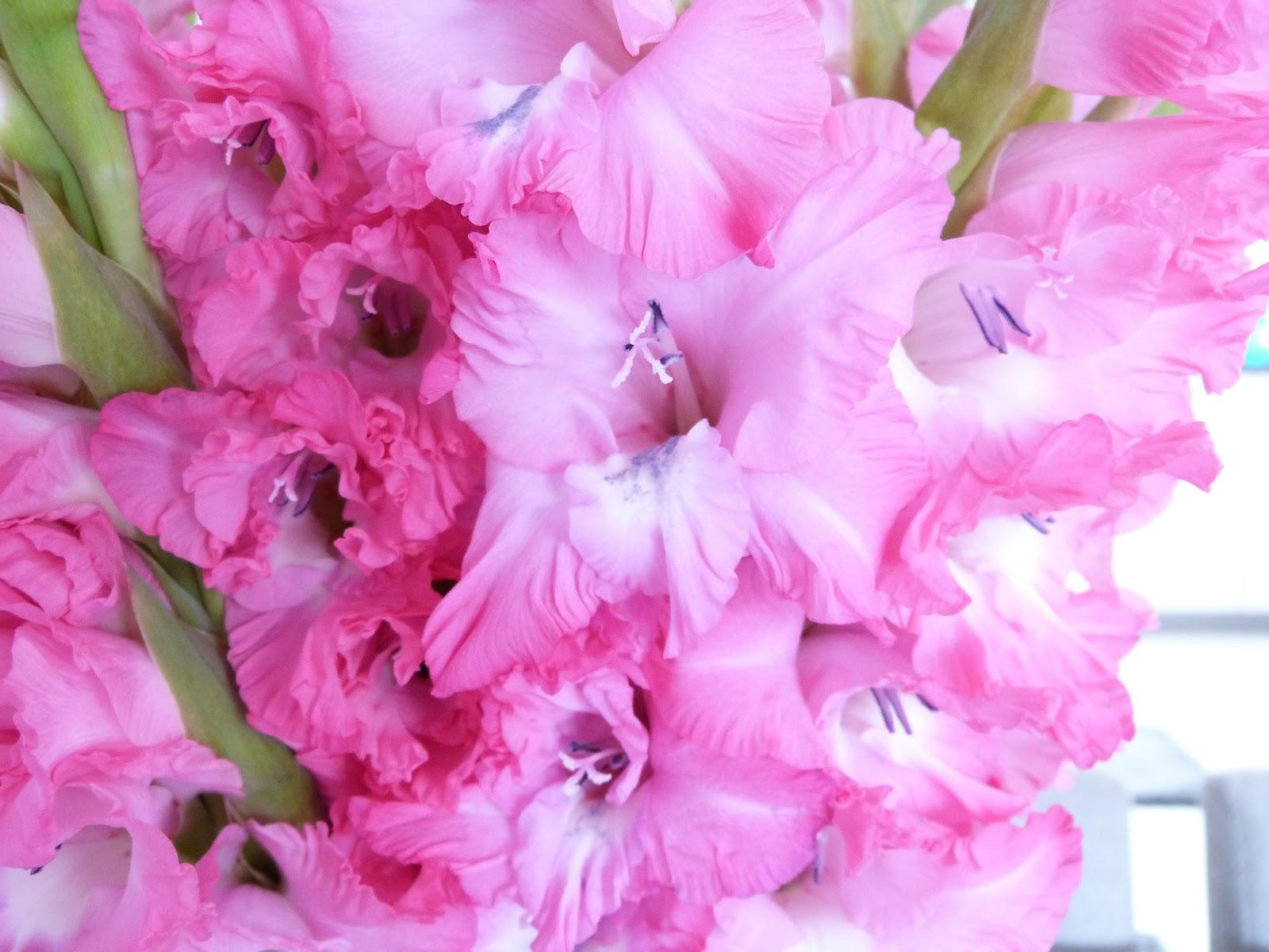 Het brocante schelpenhuisje: roze gladiolen