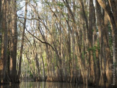 Lacassine Bayou -- Louisiana bonveillercher.blogspot.com