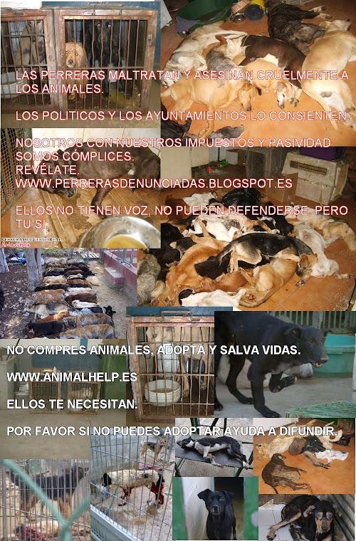 MAS MOTIVOS PARA DECIR NO A LA VENTA DE ANIMALES