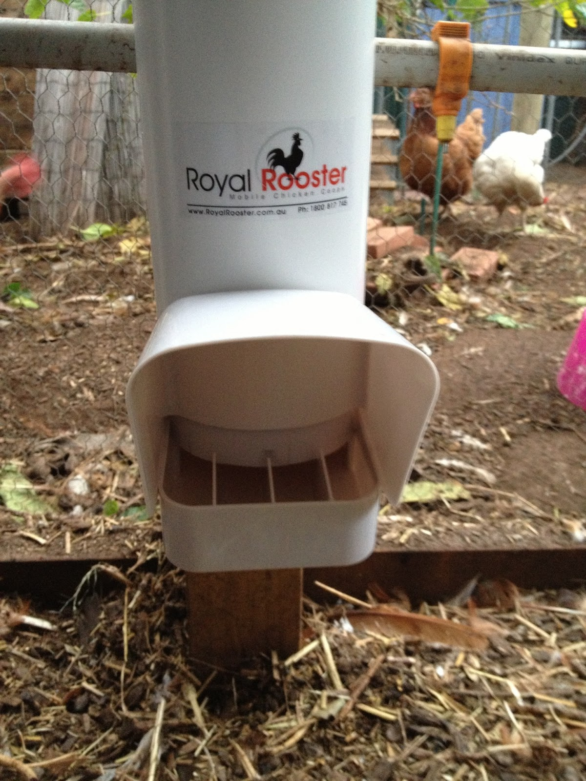 New Chicken Feeders