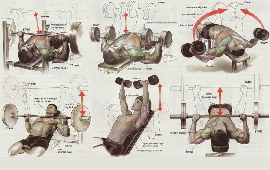 Bodybuilding Chest Exercises Chart Hd Images