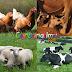 Hukum Islam Tentang Binatang Halal dan Haram - Agama Islam