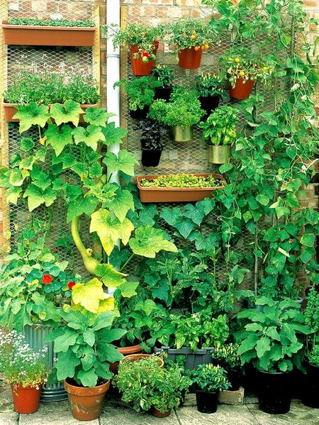 Come iniziare a coltivare un orto in vaso o in piena terra for Garden ideas for big spaces