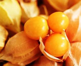 الحرنكش يقال أنه فاكهة الفقراء ~ تعرف على فوائده الصحية والغذائية