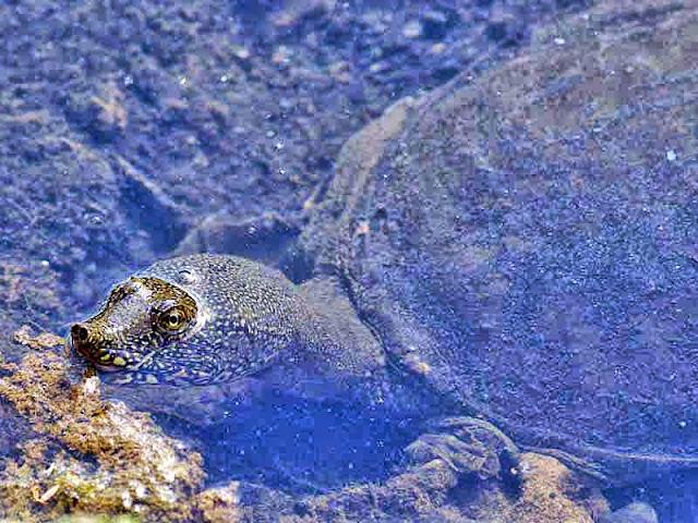 Outdoors, water, turtle, wildlife