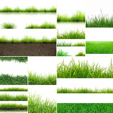STOCK PHOTO صور عالية الجودة شرائح من العشب والنجيل