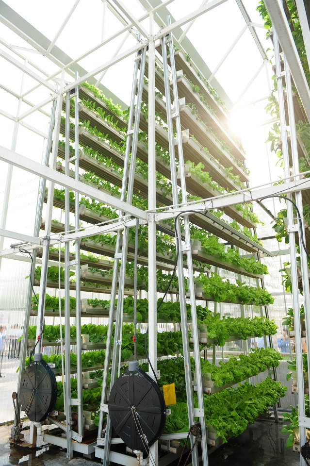 if only singaporeans stopped to think first vertical farm