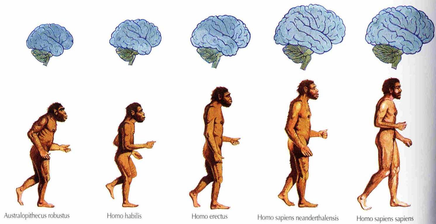 Почему человек-биосоциальное существо