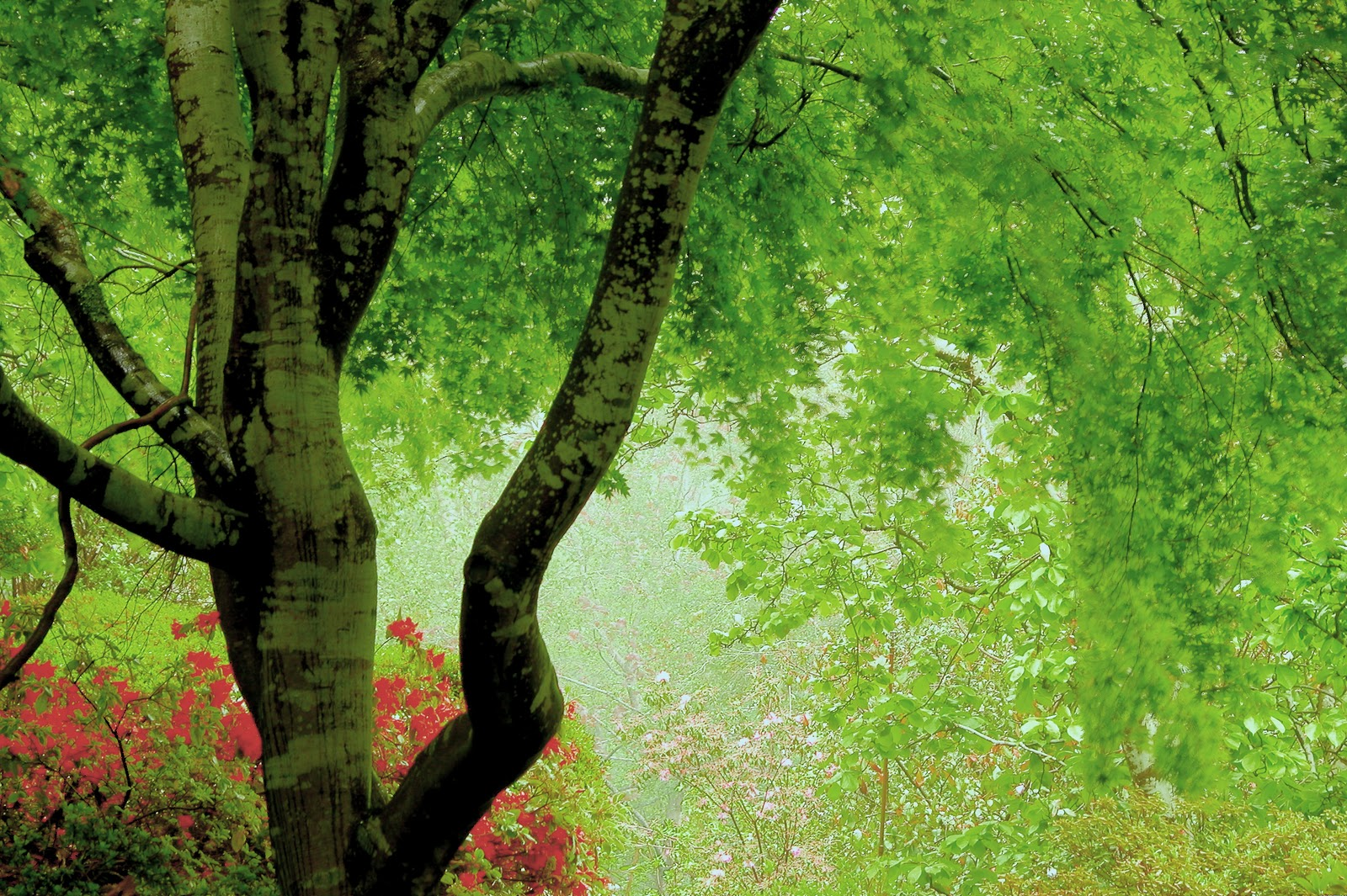 http://1.bp.blogspot.com/-z16NkNlWJUk/TsLIPPamZ-I/AAAAAAAACtU/rX-SPw0IT8w/s1600/backgrounds-high-resolution-1280x1024-wallpaper-hd-green-forest.jpg