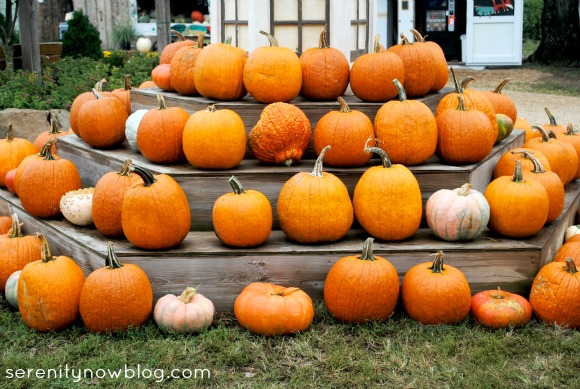 Pumpkin Patch Pictures, from Serenity Now