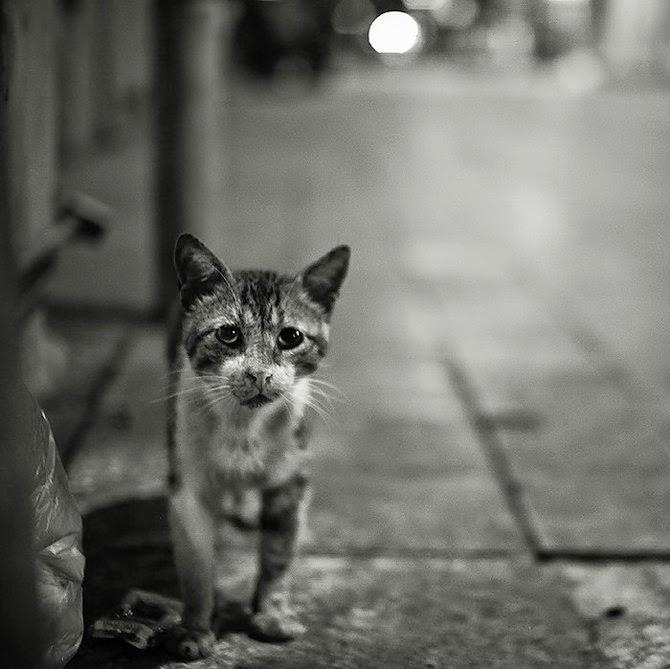 manusia comel dipuja puja manusia jalanan tak siapa yang peduli