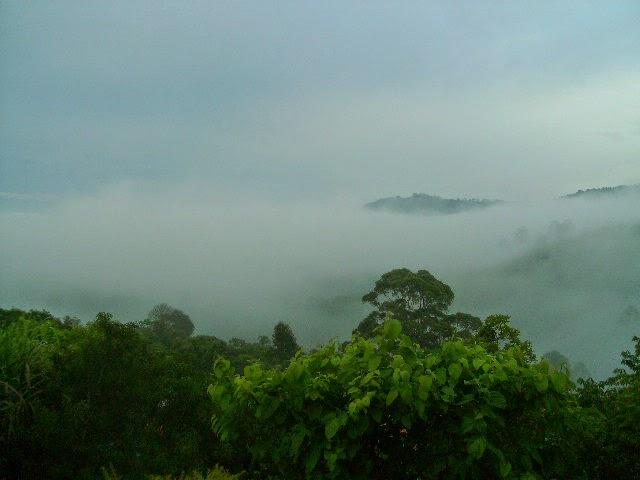 Amanhecer com neblina