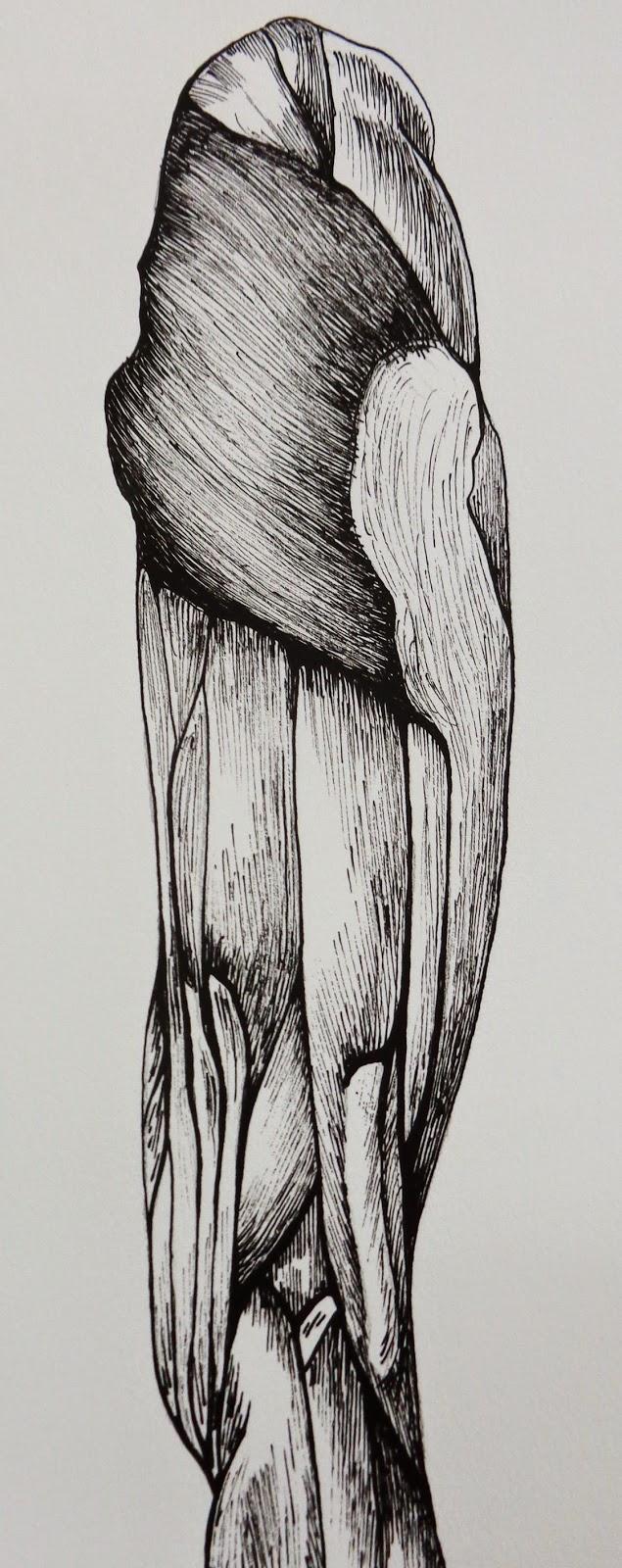 Perfecto Anatomía Gris 2014 Ilustración - Imágenes de Anatomía ...