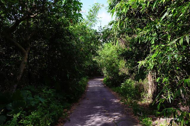 出水泥路後沿著水泥路往下走可以接到劍南路。