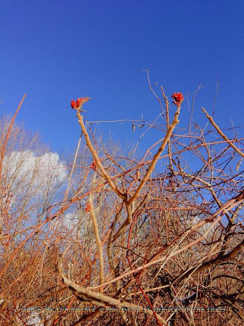 Spotting Bluebirds