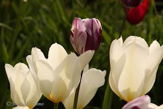 Valkoinen tuo valoa värikkääseen kukkapenkkiin