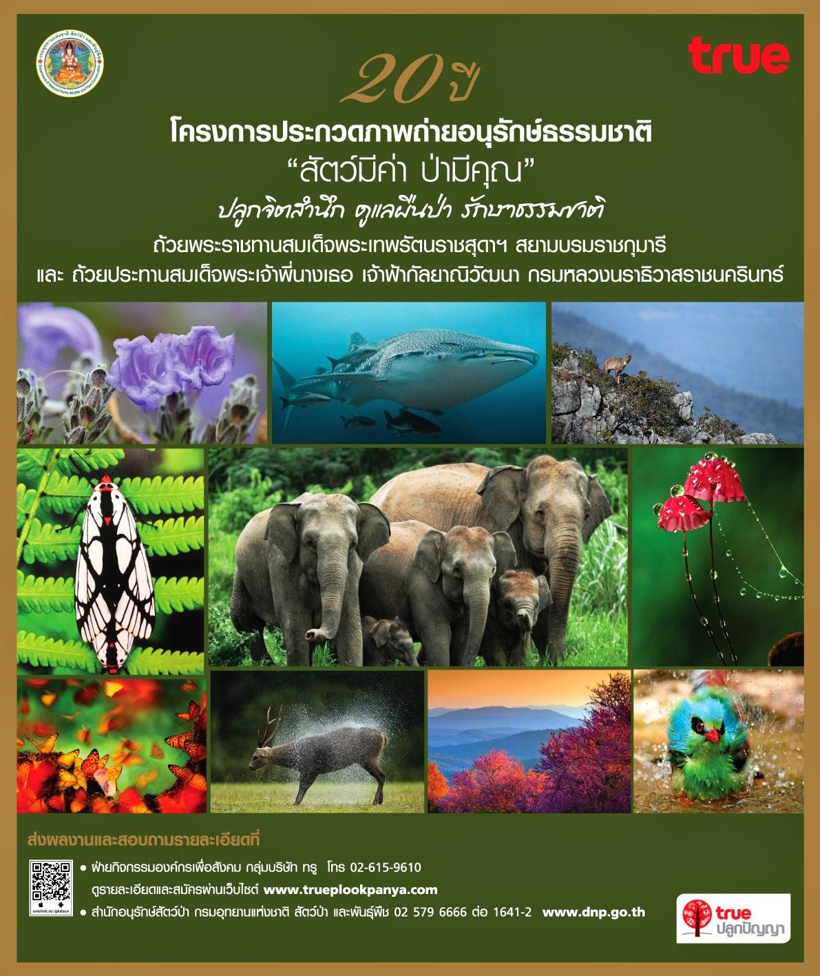 ประกวดภาพถ่าย อนุรักษ์ธรรมชาติ 2557 สัตว์มีค่า ป่ามีคุณ