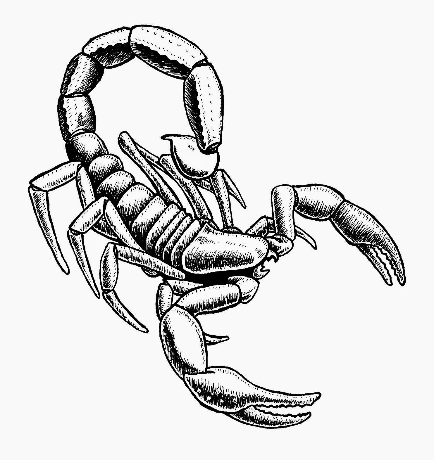 Изображения и рисунки скорпиона 4