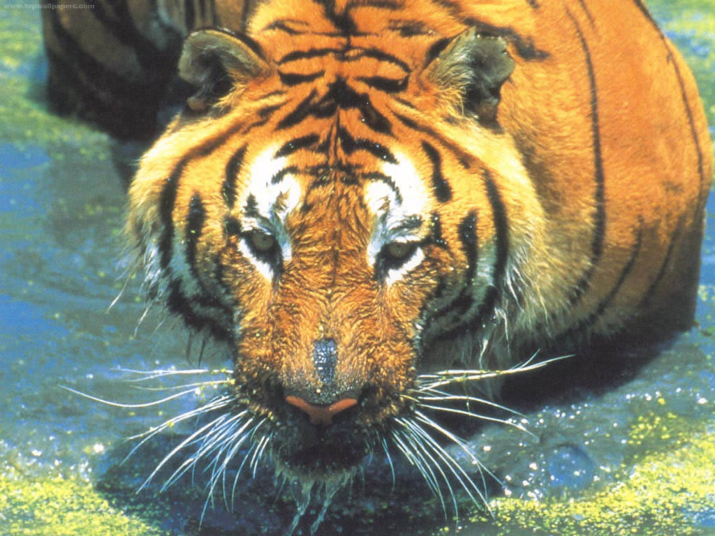 lovely animals  album 29