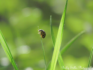 Compared to God, we are like the lady bug compared to nature.