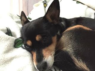 Zelda, la mascotte di Sad Dog
