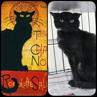 Roger, the Miami Le Chat Noir!
