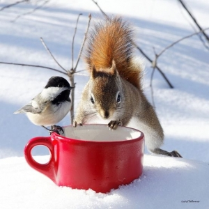 photo of squirrel and small bird looking in red mug in the snow