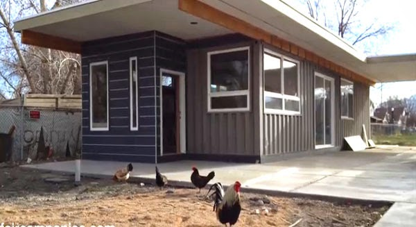 chickens-roam-around-house