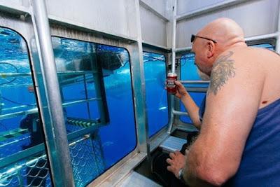 Khám phá dịch vụ lồng kính ngắm cá mập dưới đại dương