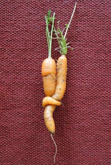 Carrots in Love
