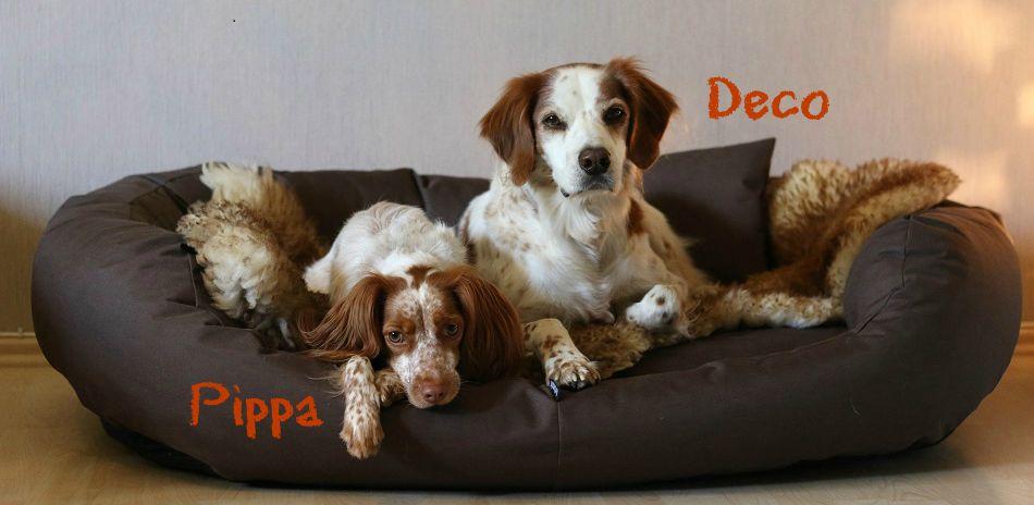 Hundeblog | Fressen, Kuscheln Buddeln...