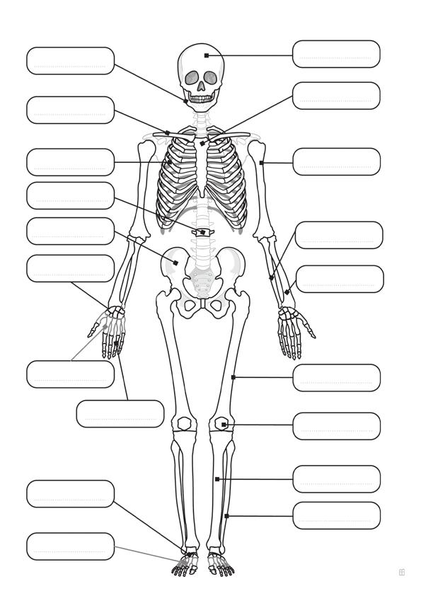 Biología: Sistema esquelético