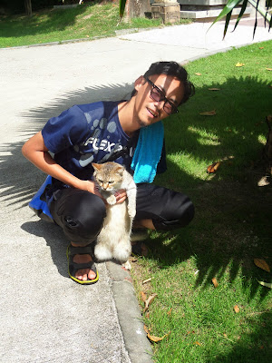 Kucing comel, kucing gebu