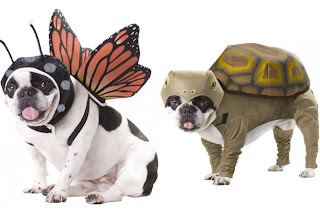 foto cachorros de roupa