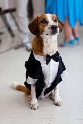 perrito elegante