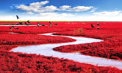 Red Seabeach in china is art derived from natural