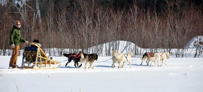 Dogsledding - Embrace Christmas Spirit in Beautiful Quebec City, Canada