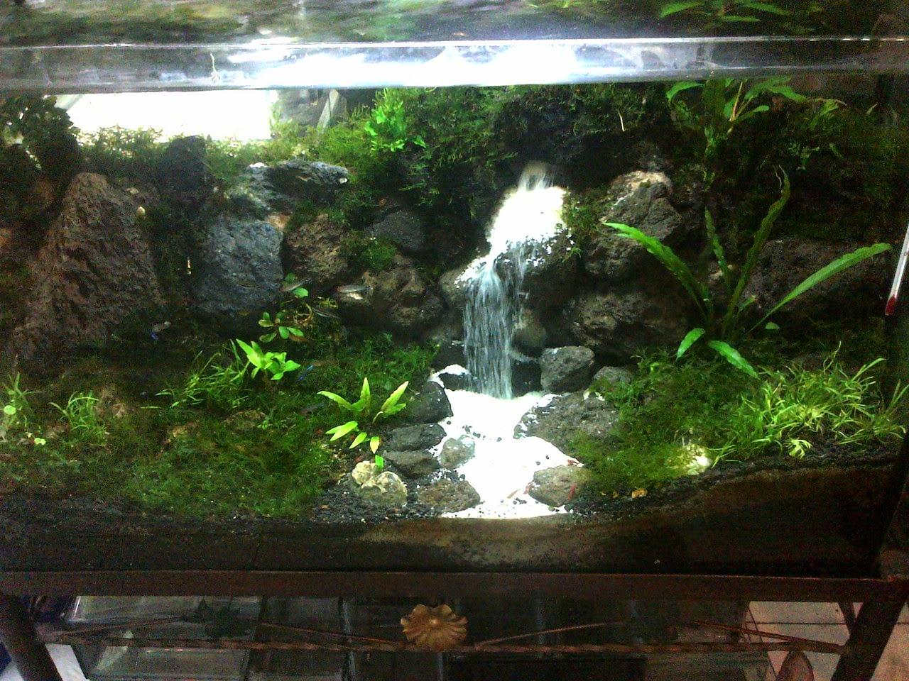 Pirdot kumpulan foto aquarium aquascape keren - Gambar aquascape ...