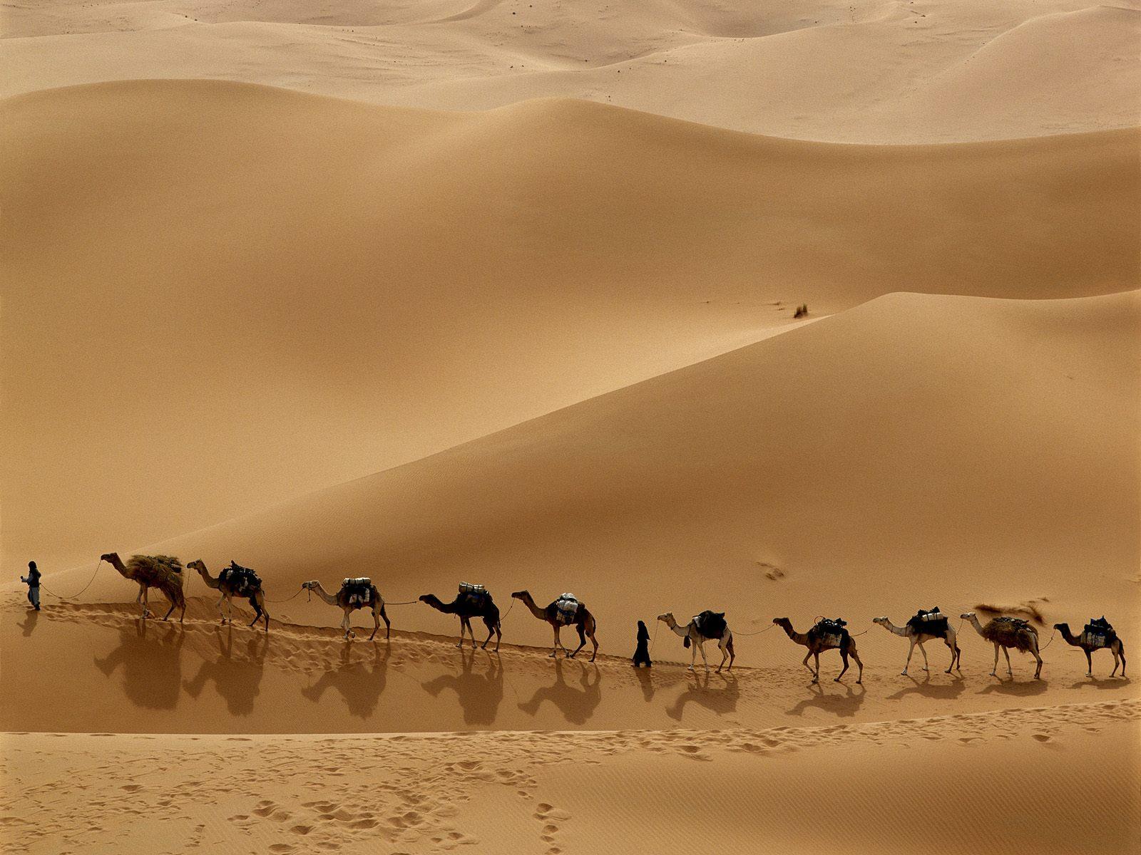 Sezione - Tara & simili > - Pagina 6 Carovana+di+cammelli+nel+deserto