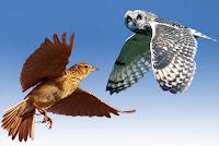 Lark or owl?